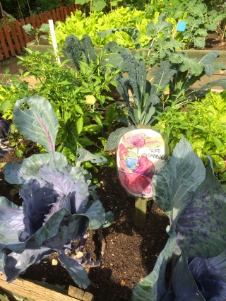 Red cabbage with cavolo nero (black kale) in the background