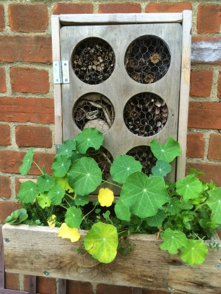 Bug hotel for all those precious ladybirds