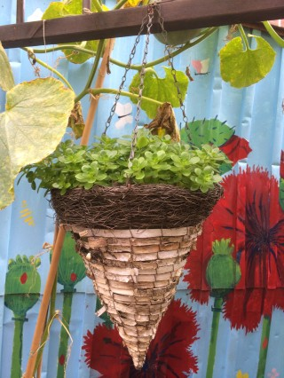 It's not just a lovely food garden but lots of lovely little touches also, like this succulent plant from a cone-shaped hanging basket
