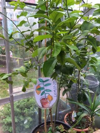 And even a lemon tree!